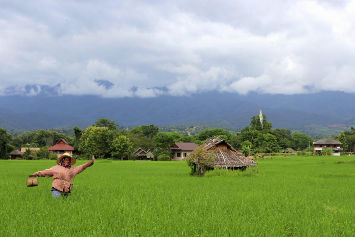 pole-ryzowe-azjatka-na-polu-ryzowym
